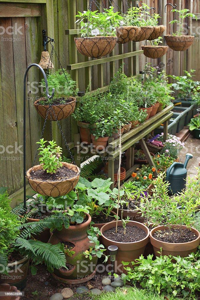 Container Garten – Foto