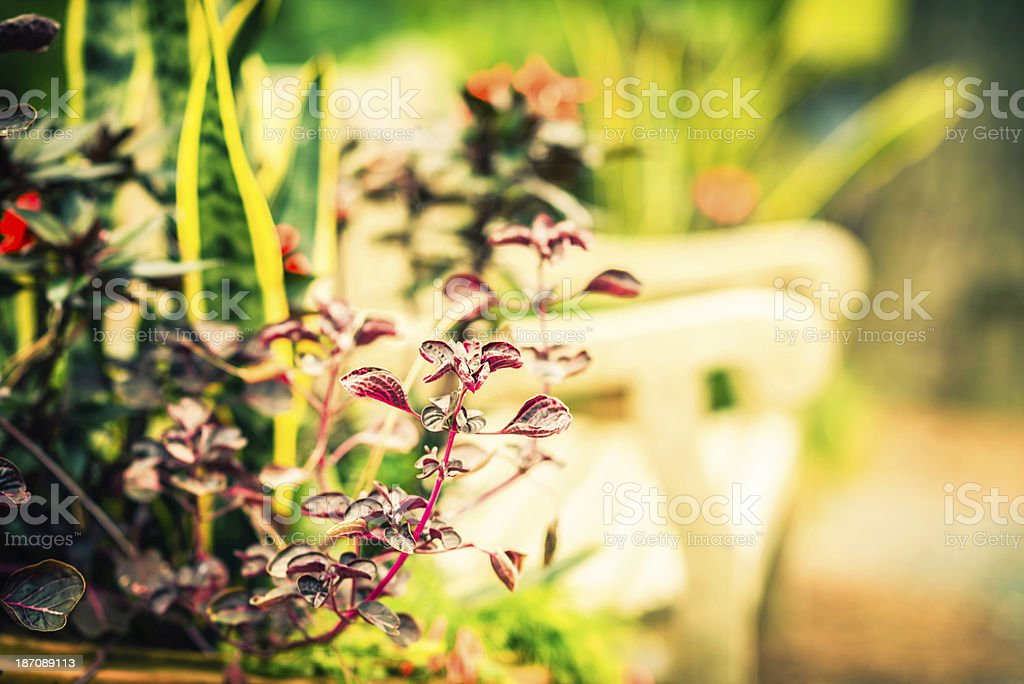 Container Gardening royalty-free stock photo