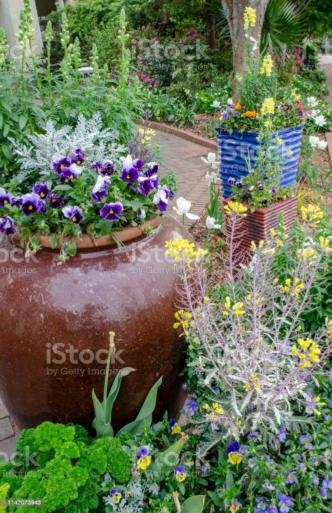 Container Gardening with Various Early Spring Flowers and Blossoms