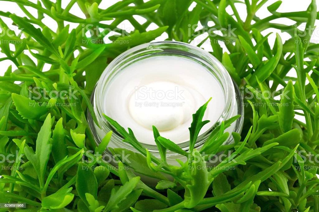 Container of cream in green leaves stock photo