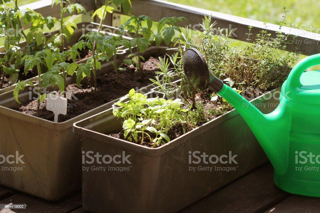 Verduras De Contenedores De Jardinería Huerto En Una Terraza