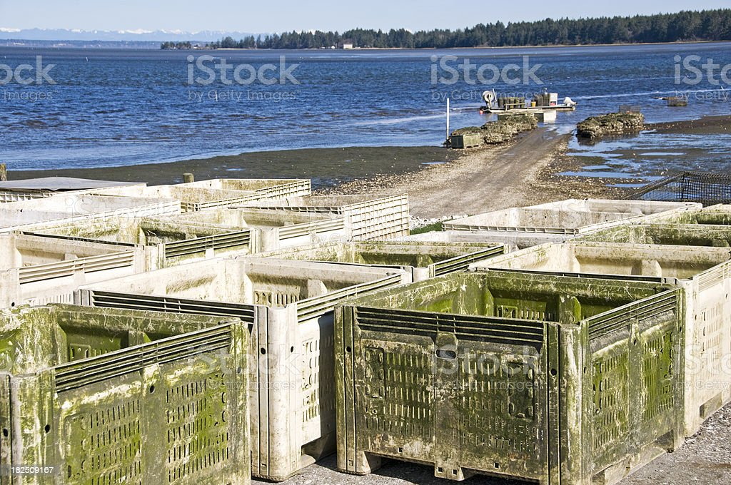 Containers for oysters stock photo