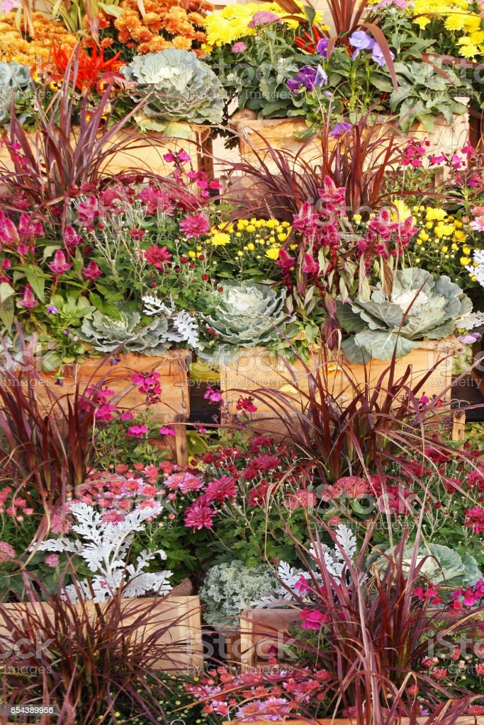 Containers of Vibrant Fall Flowers for Sale at Garden Center