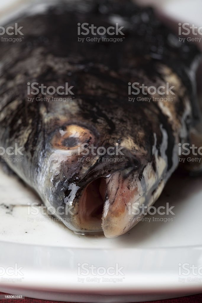 contaminated fish royalty-free stock photo