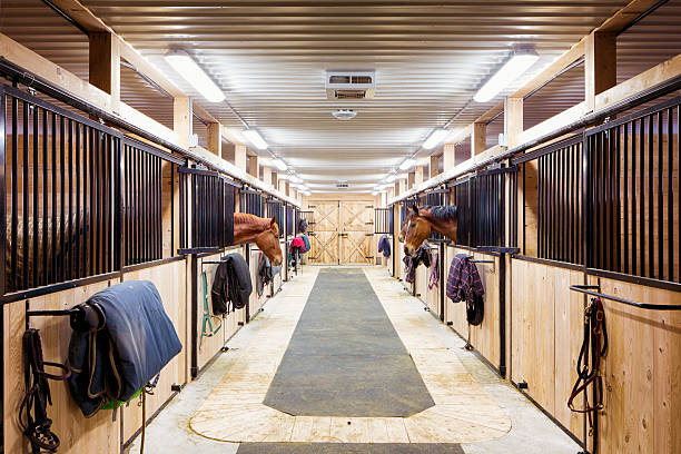Contemporary horse stalls Contemporary horse stalls in horse riding school. Saveral horses are peeking through their windows. working animal stock pictures, royalty-free photos & images