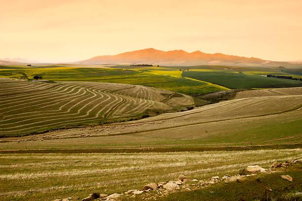 Contour plough orange hills and green fields stock photo