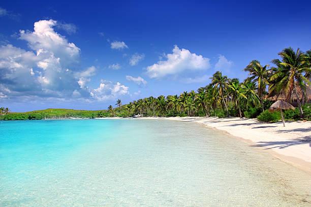 Contoy Island palm treesl caribbean beach Mexico stock photo
