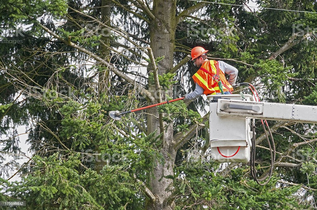 Contract worker trimming tree branches away from power lines royalty-free stock photo
