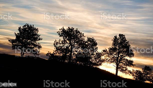 Photo of Contrail sunrise