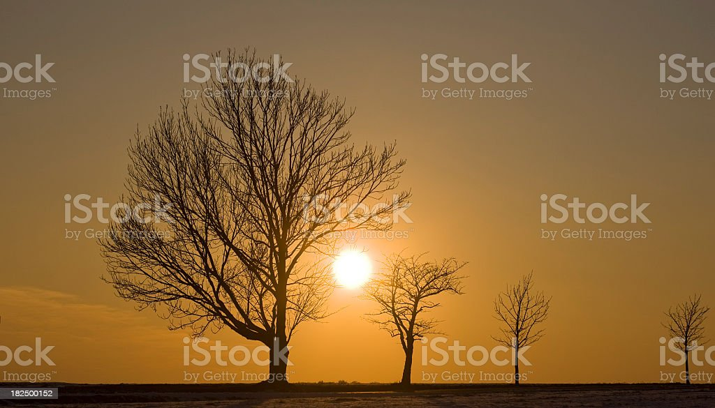 contrast at sunset royalty-free stock photo