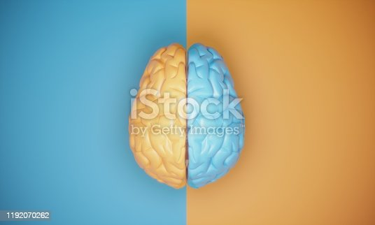 Brain lobes top view symbolizing contrast with blue and orange colors.