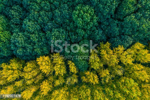 istock Contrast forest - drone photo 1192027478