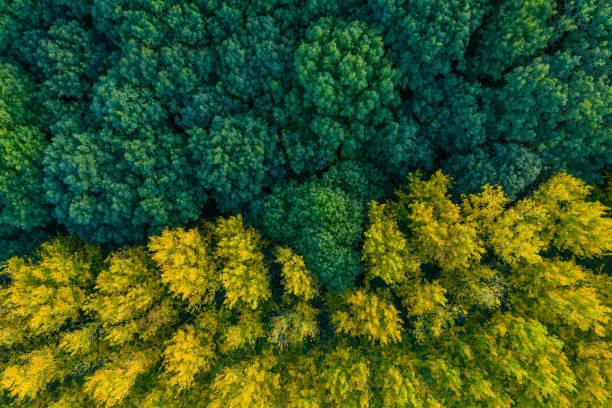 floresta do contraste - foto do zangão - floresta - fotografias e filmes do acervo