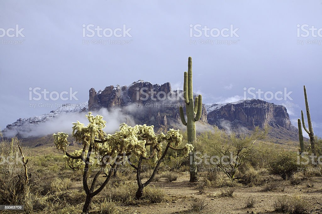 Contrast in the Desert royalty-free stock photo