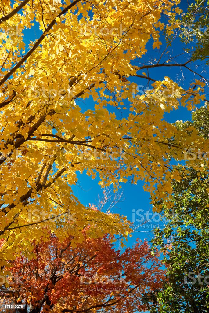 Yellow and Blue Scene