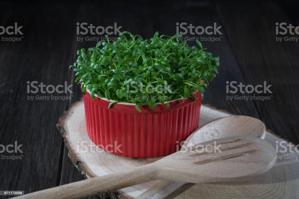 Contraste de vermelho e verde. Salada de agrião fresco no pote vermelho - foto de acervo