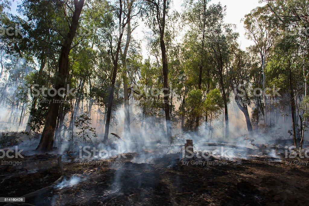 Fuego controlado quemaduras - foto de stock