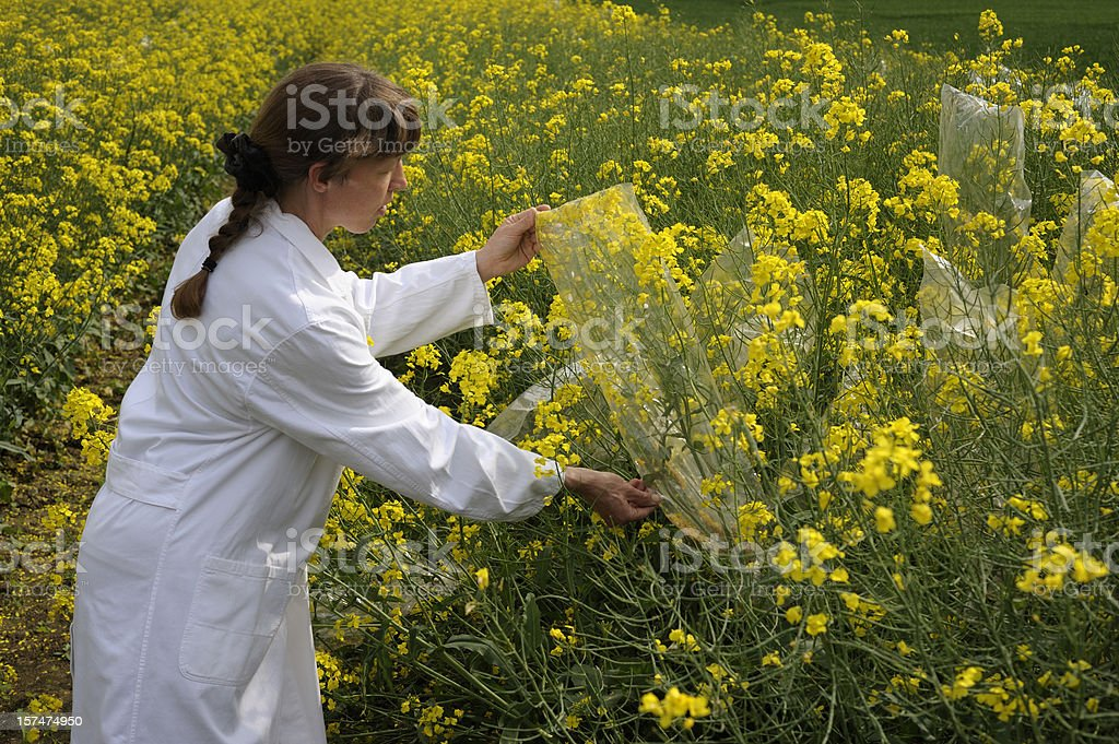 Controlling outdoor scientific experiment royalty-free stock photo
