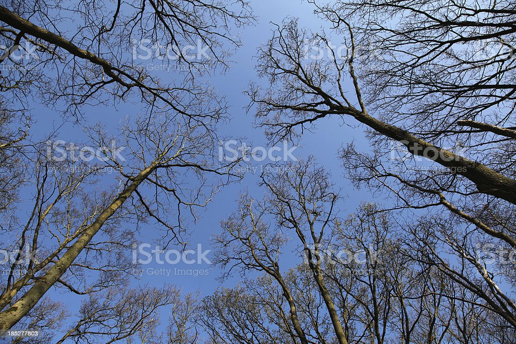 Converging Tree Branches stock photo