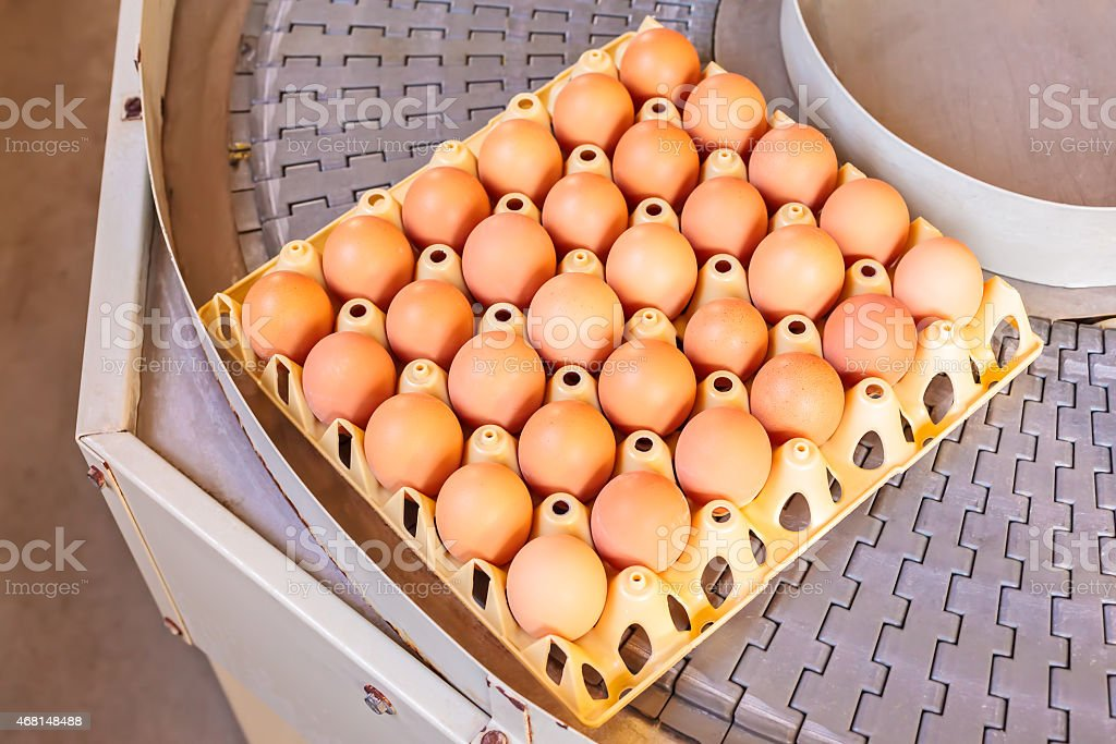 Conveyor belt transporting crates with fresh eggs stock photo