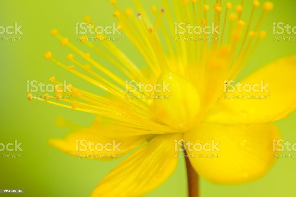 Coobbs Otogiri flowers foto stock royalty-free