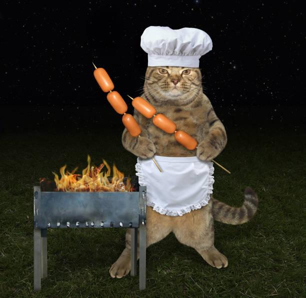 katze in der nähe ein grill zu kochen - grillschürze stock-fotos und bilder