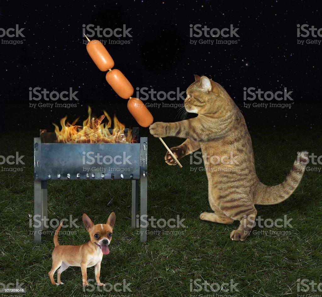 Chat cuisinier près de son chien - Photo