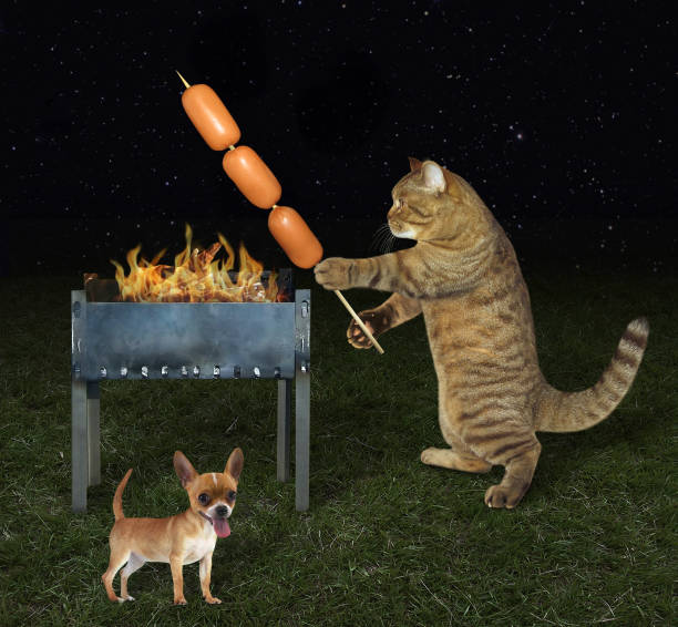 cook cat near his dog - barbecue grill stock photos and pictures