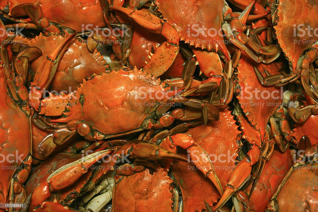Cooked Chesapeake Bay Blue Crab Background seafood Pattern stock photo