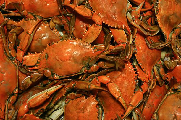 cooked chesapeake bay blue crab background seafood pattern - blauwe zwemkrab stockfoto's en -beelden