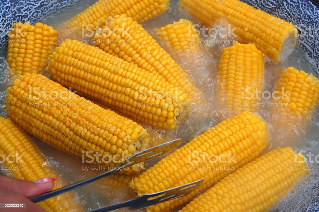 Cooked Corn stock photo