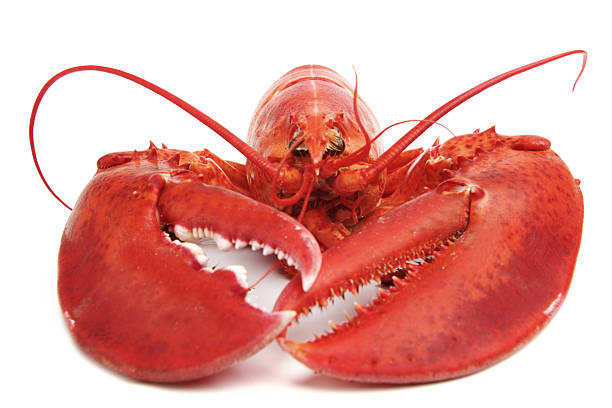 Cooked lobster stock photo