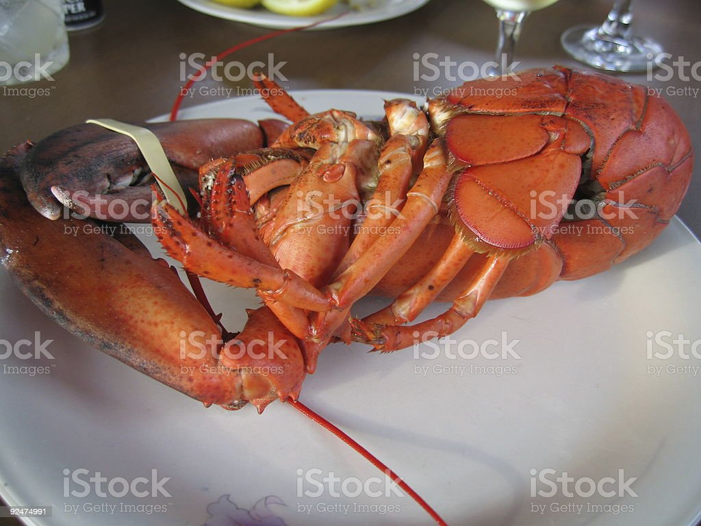 Cooked Maine Lobster royalty-free stock photo