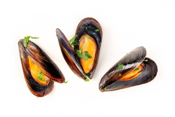 Cooked mussels, shot from the top on a white background Cooked mussels, shot from the top on a white background, a flat lay composition mussel stock pictures, royalty-free photos & images