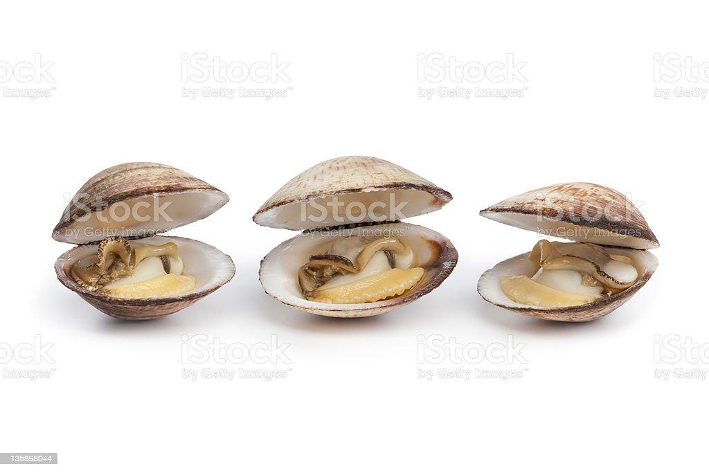 Abierto seashells preparado - foto de stock