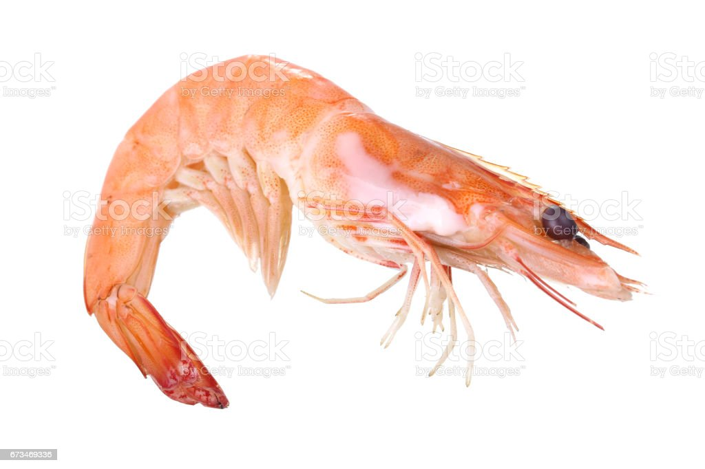 Cooked Shrimp stock photo