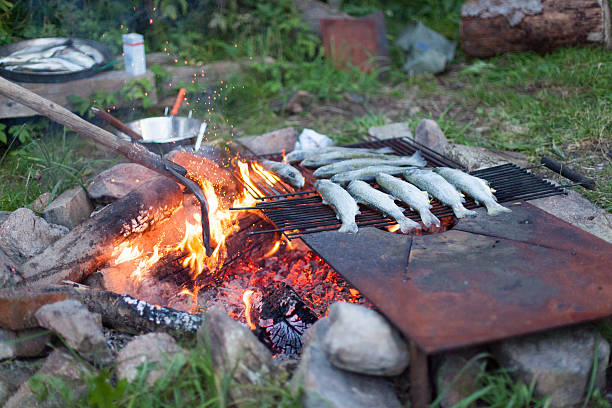 cozinhar peixe em uma fogueira de acampamento - peixe na grelha imagens e fotografias de stock