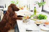 Cooking vegetarian food for pets. In the interior.