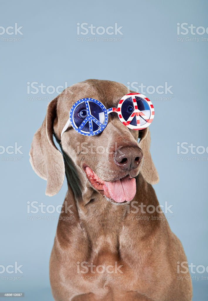 Cool 4th of July Peace Dog stock photo