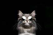 istock cool cat with shades 1249884596