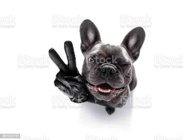 Cool curious dog looks up picture id851020732?b=1&k=6&m=851020732&s=612x612&h=tqzm5x7t3xqopqcjx38ntsb hpvj6xyufugnozkxhtu=