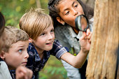 A multi-ethnic group of elementary school kids are hiking outdoors in a forest. They are wearing regular clothing. A Caucasian girl is using a magnifying glass to look for bugs, and her friends are watching.