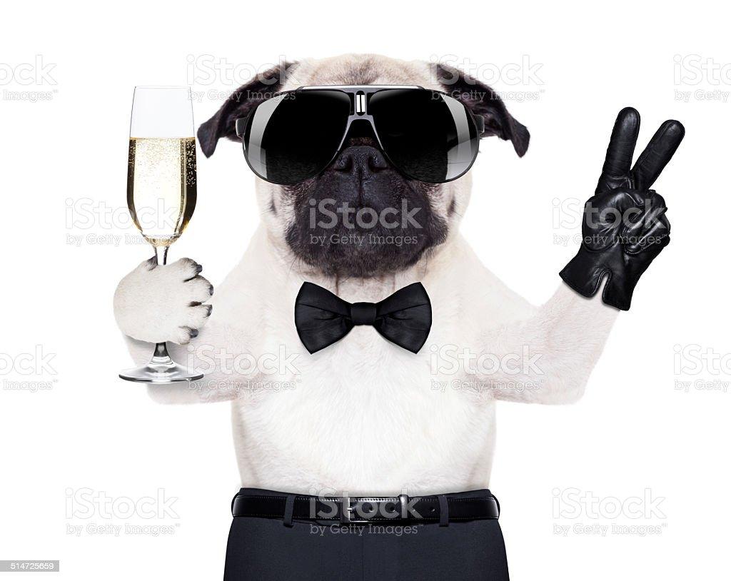 cool dog peace stock photo