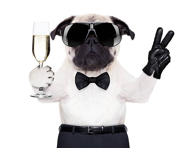 coole hund frieden - silvester mit hund stock-fotos und bilder
