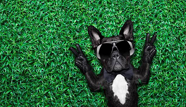 cool hund - coole liebessprüche stock-fotos und bilder