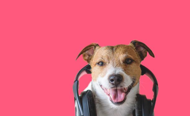 Coole hond met hoofdtelefoon luisteren en genieten van muziek foto