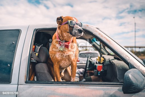 istock Cool dog with sunglasses enjoying pick-up ride on american highway 940915736
