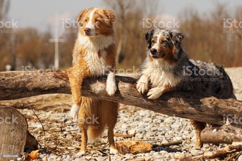 Cool Hunde – Foto