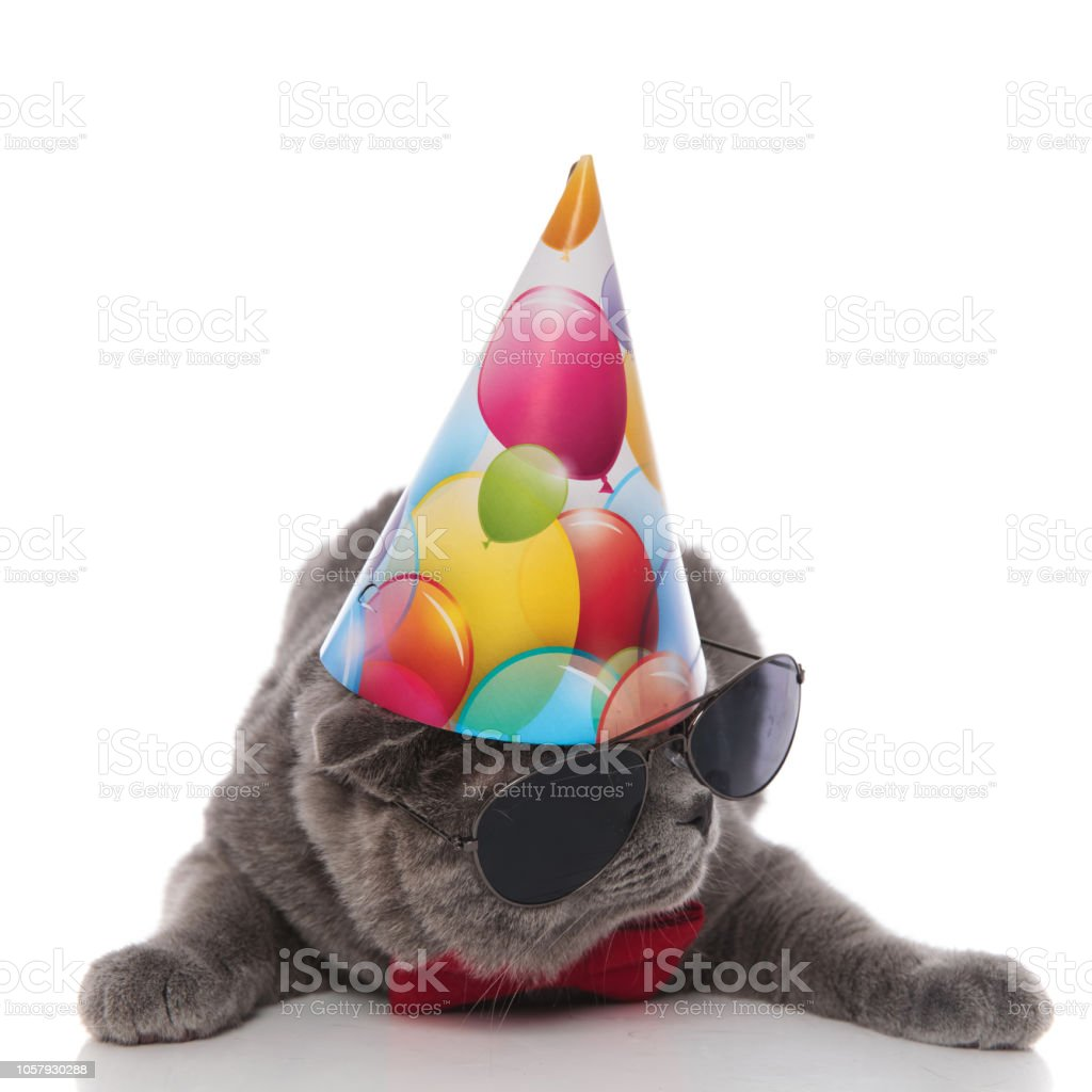 Cool Grey Gentleman Cat With Birthday Hat Looks To Side