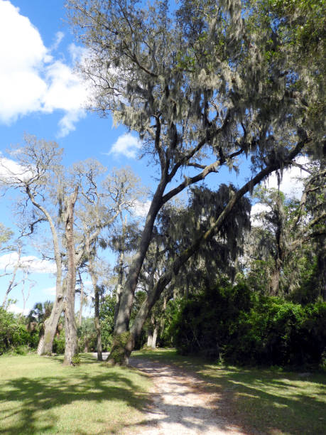 Cool looking tree on the walking path in Florida stock photo